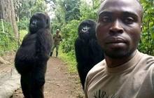 """Câu chuyện đằng sau bức ảnh khỉ đột đứng selfie """"như người"""": Tại sao chúng đứng thẳng lưng được?"""
