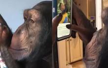 """Video """"tinh tinh dùng Instagram"""" đang gây bão: Sự thật phía sau có thể khác hoàn toàn"""