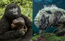 Loạt ảnh thiên nhiên đạt giải thưởng của Viện hàn lâm California: Chứa đựng cuộc sống hoang dã tàn khốc mà cảm động