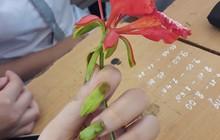 Ngắt hoa phượng làm móng tay, trò chơi tuổi thơ nhiều năm về trước nay lại bùng lên trong giới học trò