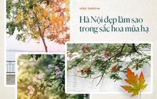 Chùm ảnh: Hà Nội và bản tình ca của những loài hoa mùa hạ thay nhau khoe sắc trên phố