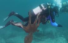 """Bạch tuộc """"siêu to khổng lồ"""" níu mãi không buông anh thợ lặn ở biển Nhật Bản khiến dân mạng vừa cười vừa sợ"""