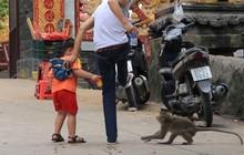 Bình Dương: Sau vụ hổ cắn lìa tay, lại xuất hiện khỉ cắn người