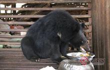 Chăm bẵm chó cưng suốt 2 năm trời, người đàn ông mới phát hiện hoá ra nó là... gấu đen