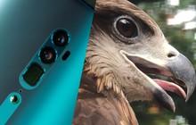Hóa ra tác dụng thú vị nhất của camera zoom 10x là đi chụp động vật