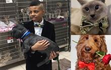 Việc tử tế: CEO tuổi 12 thành lập đế chế may nơ cho chó mèo cơ nhỡ để chúng dễ được nhận nuôi hơn
