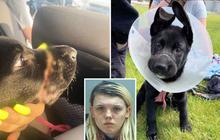 Cô gái nhẫn tâm buộc mõm chó cưng suốt 2 tuần không thể ăn uống chỉ vì lý do đơn giản khiến ai cũng phẫn nộ
