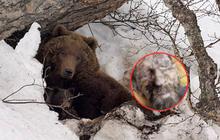 """Người đàn ông trông như xác ướp sau khi được cứu từ hang gấu, khiến mọi người sợ hãi khi nói mình """"bị dự trữ để làm thức ăn"""""""