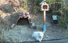 Sau khi chủ qua đời, chú chó trung thành vẫn đứng chờ ở nơi xảy ra tai nạn suốt 18 tháng trời nhất quyết không chịu rời đi