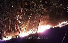 10.000 du khách phải sơ tán khỏi bãi biển nổi tiếng của Croatia do cháy rừng