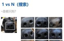 """Trung Quốc đã có công nghệ nhận diện chó bằng... vân mũi: Vừa giúp tìm """"boss"""" đi lạc, vừa phạt chủ thiếu văn minh"""