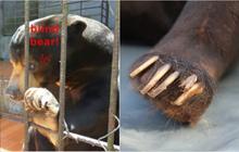 Trước khi KDL thác Prenn bị tố ngược đãi voi, từng có 1 chú gấu được giải cứu khỏi đây trong tình trạng sức khỏe tồi tệ