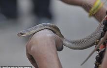 Bị rắn độc cắn, người đàn ông quyết tâm cắn lại để trả thù nhưng phải nhận kết cục đau đớn vì sự sơ suất của mình