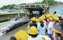 Trường tiểu học ở Nhật Bản cho học sinh quan sát cảnh giết cá voi sau đó viết bài nêu cảm nghĩ