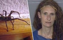 """Sợ """"tái mào"""" vì nhìn thấy nhện, người phụ nữ thẳng tay đốt nhà rồi bị bắt"""