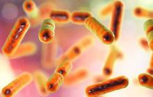 Phòng cho kịch bản diệt vong, các nhà khoa học đang muốn xây một hầm lưu trữ vi sinh vật