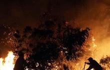 Cháy rừng ở Chile, hàng trăm người phải đi sơ tán