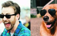 [Vui] Twitter chỉ ra sự giống nhau đến kỳ lạ giữa tài tử Chris Evans và chó Golden Retriever