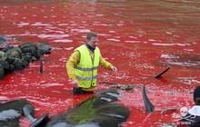 Sự thật tàn khốc đằng sau vùng biển cứ đến tháng 8 hàng năm lại chuyển sang màu đỏ tươi rùng rợn như phim kinh dị
