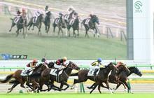 Dùng chất kích thích, 156 con ngựa bị cấm đua