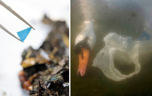 Cảnh báo tình trạng ô nhiễm nhựa tại các con sông