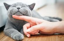 Các nhà nghiên cứu tiếp tục chứng minh: vuốt ve chó, mèo sẽ giúp sinh viên giảm căng thẳng