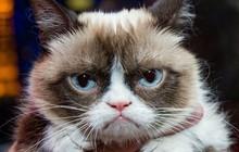 Khoa học nói rằng: Mèo xấu tính chủ yếu do học tập lối sống và tính cách của chủ