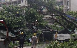 Biển đông xuất hiện áp thấp nhiệt đới, Sài Gòn có thể mưa to từ đêm nay và những ngày tới