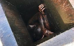 Giải cứu thanh niên tự dưng mắc kẹt 2 ngày trong ống khói đầy dầu mỡ của một nhà hàng bỏ hoang