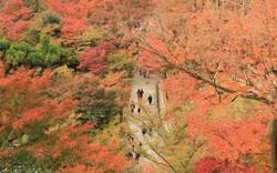 Đến Nhật Bản mùa lá đỏ, đừng bỏ qua những trải nghiệm này!