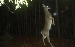 Đặt máy quay lén động vật, thợ săn bất ngờ khi thấy những hành vi kỳ lạ của chúng