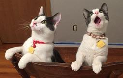 20 boss mèo bỗng tỏ ra bất bình thường như có vấn đề về thần kinh