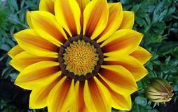 16 bông hoa cánh đều tăm tắp làm vừa lòng những người mắc ám ảnh rối loạn cưỡng chế