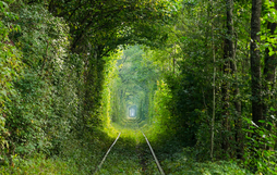 Ngắm nhìn 10 con đường tự nhiên đẹp nhất thế giới