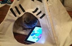 13 con mèo nặc nô khiến chủ nhân trải qua nhiều phen khóc thét