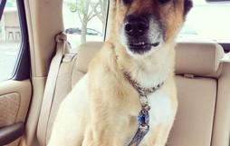 Khuôn mặt đáng thương của 15 chú chó cứ bảo đi bác sĩ là sợ chết khiếp