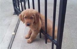 16 trò lách luật đáng yêu của những chú chó bướng như ông tướng