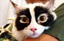 Chân dung 16 chú mèo sở hữu vết bớt hiếm có khó tìm
