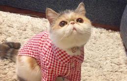 Chú mèo có bộ mặt nghiêm trọng nhất quả đất