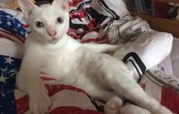 20 dáng ngồi phong thái hoàng thượng của các boss mèo