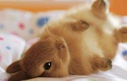 17 khoảnh khắc đáng yêu của bầy thỏ con khiến bạn xao xuyến trong lòng