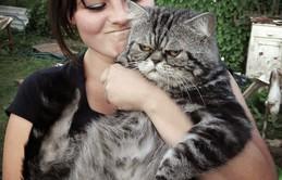 Chân dung 16 chú mèo chả thiết tha gì việc được chụp hình cùng chủ nhân