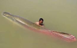 """Được trả 22 triệu đồng không bán, ngư dân Tây Ninh mang cá """"khủng"""" nặng 30kg xẻ thịt bán rẻ bèo"""