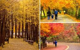6 trải nghiệm tuyệt vời bạn phải thử ngay và luôn khi tới Hàn Quốc thu này!