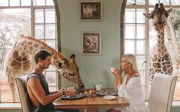 Nước Anh chính là thiên đường dành cho hội yêu động vật với những khách sạn nơi bạn có thể sống chan hòa cùng muông thú