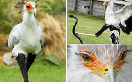 Nàng 'chim thư ký' có cặp chân dài kiêu sa và hàng mi cong sang chảnh khiến các chị em cũng phải ghen tỵ