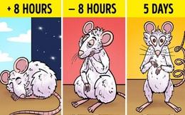 """Tác hại kinh khủng của việc thiếu ngủ: Não bộ của bạn có thể tự """"ăn"""" chính nó và đây là cách để thảm họa này không xảy ra"""
