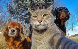 """Cười nghiêng ngả với loạt ảnh """"tự sướng"""" cực cool của động vật"""