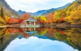 Đến Hàn Quốc ngay đi, lá chuyển sang màu đỏ rồi