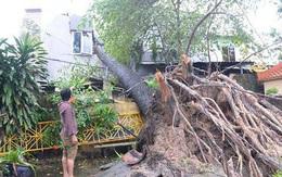 Ảnh hưởng của bão số 14: Nhiều nhà dân tốc mái, cây cổ thụ ngã đổ ở Sài Gòn